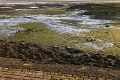 TPC-Blackwater-Estuary-Low-Tide