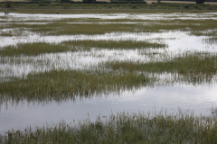 TPC-Salt-Marsh-High-Tide