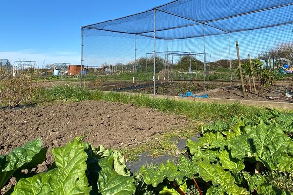 Tollesbury Parish Council, Allotment Fruit Nets